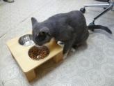 ペットの食卓代 ヒノキ